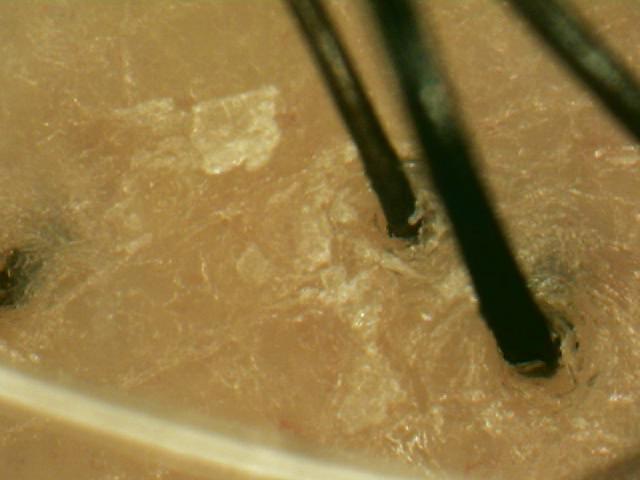 アレッポの石鹸使用後画像.jpg