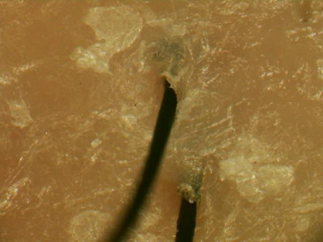 ハイグレード ザクロ 精炭酸 シャンプー使用後画像.jpg