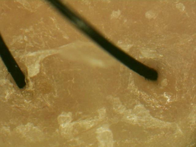 ルベル ナチュラルヘアソープ シーウィード使用後.jpg