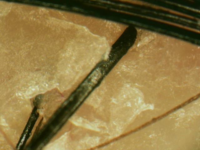 ロート製薬 50の恵 頭皮の養潤シャンプー使用前画像.jpg