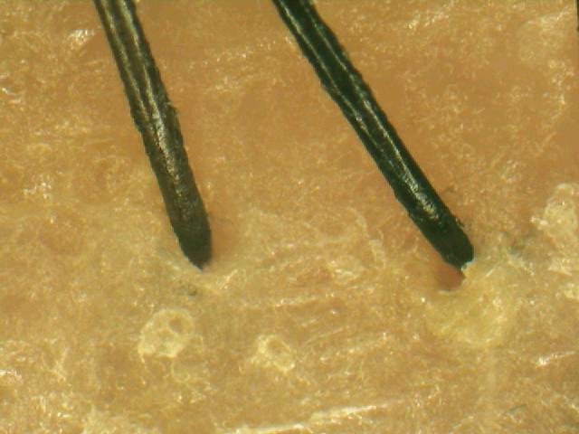 海のうるおい藻 リンスインシャンプー使用前.jpg