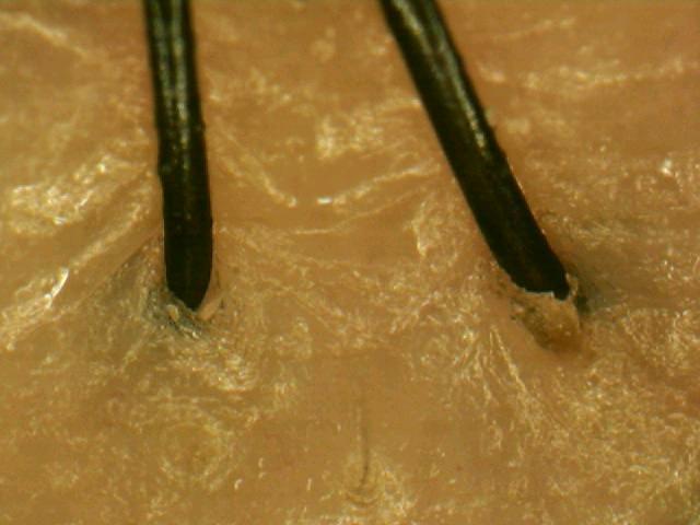 無印良品 ブルターニュの海藻シャンプー使用前.jpg